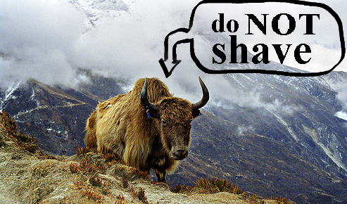 Don't Shave that Yak!
