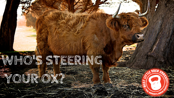 Who's Steering The Ox?